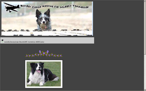 bordercollierescueofmiddletennessee