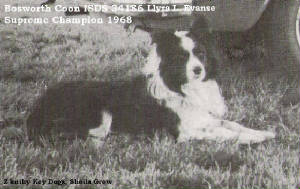 levansbosworthcoon1968internationalsusheepdogchamp