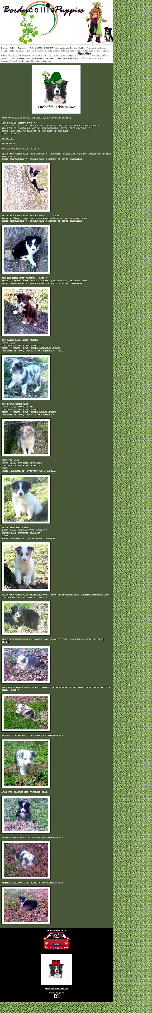 bordercolliesaintpatricksdaypuppies