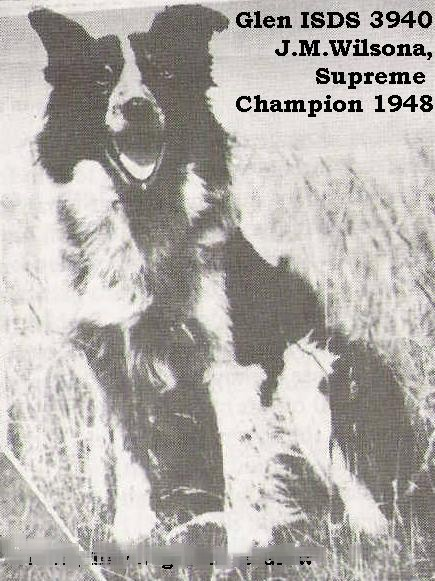 jmwilsonsglen1946scottishnationalsheepdogchampion